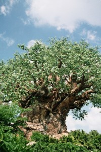 Picnic Under the Tree of Life