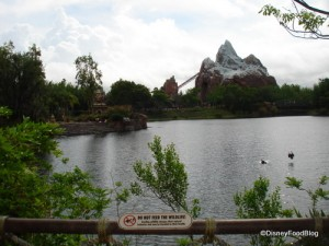 Your View From the Flame Tree Barbecue