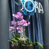 Sora Sushi Bar and Lounge R