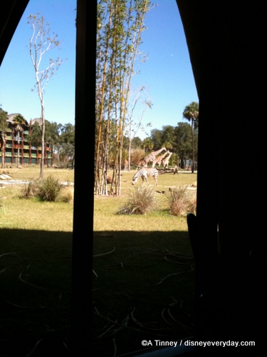 Sanaa View of Giraffe and Zebra