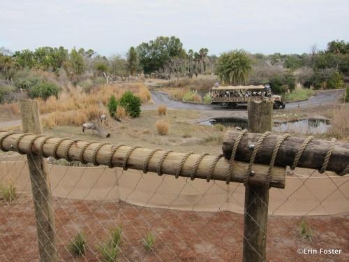 View from Wild Africa Trek
