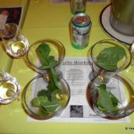 Disney Cruise Review: Mojito Seminar Aboard the Disney Magic