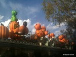 Familiar Pumpkin Faces Line Disneyland's Main Gate