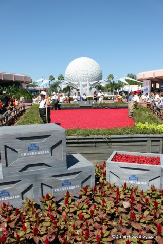 Cranberry Bog at the Epcot Food and Wine Festival