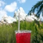 Pomegranate Martini at Disney's Animal Kingdom
