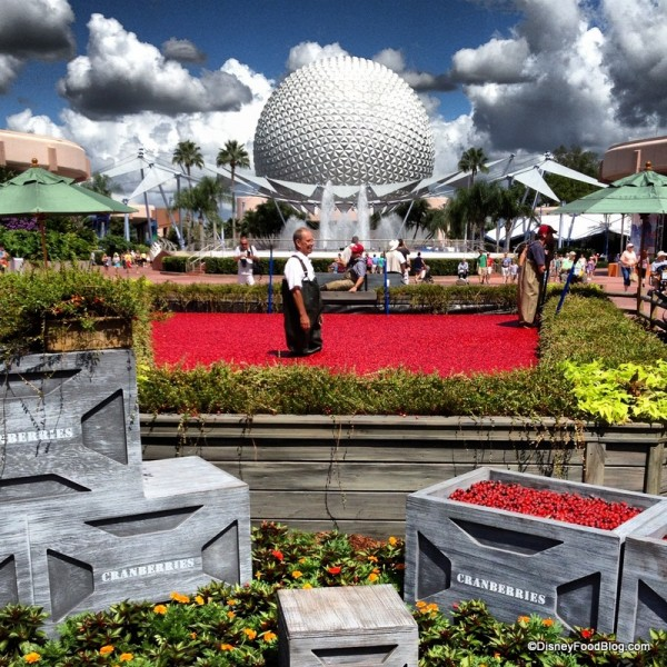 Ocean Spray Cranberry Bog Is Back at the 2015 Epcot Food and Wine Festival