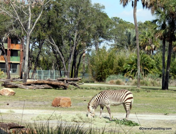 Watch the Wildlife as You Dine at Sanaa