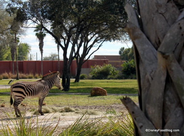 You Just Might View Some Animals While You Take in Lunch at Sanaa