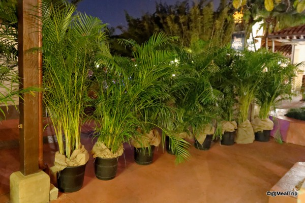 Potted palm trees keep the area private