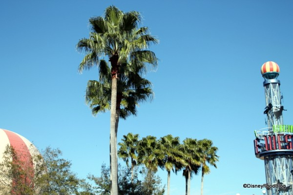 Palm trees!