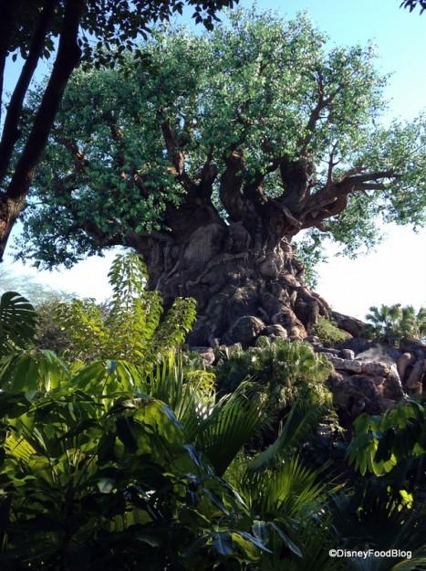 Animal Kingdom's Tree of Life