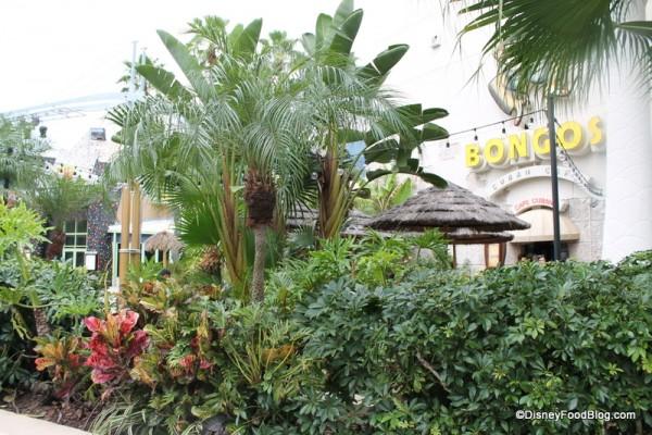 Bongos landscaping