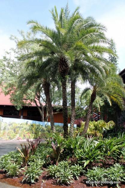 View from Pineapple Lanai