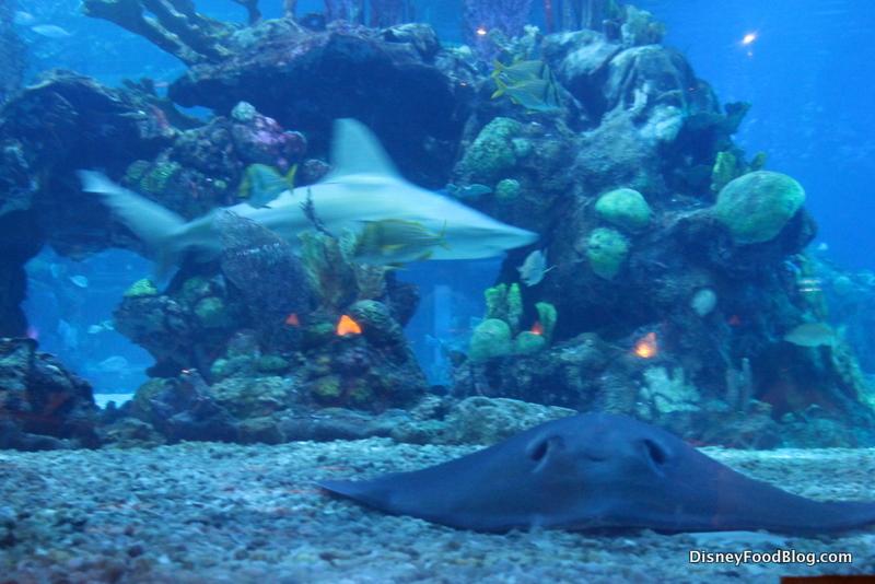 underwater restaurant disney world. Modren Disney Aquarium View Throughout Underwater Restaurant Disney World T