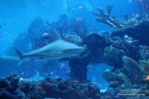 Aquarium views