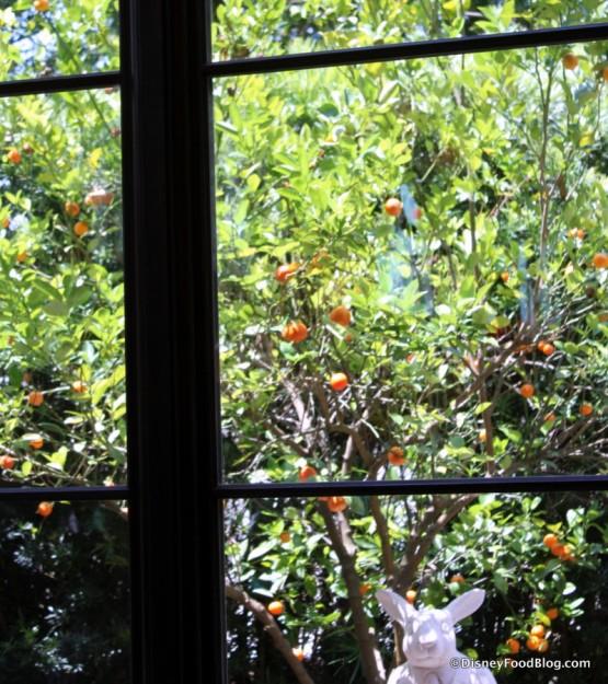 Orange Tree outside the window