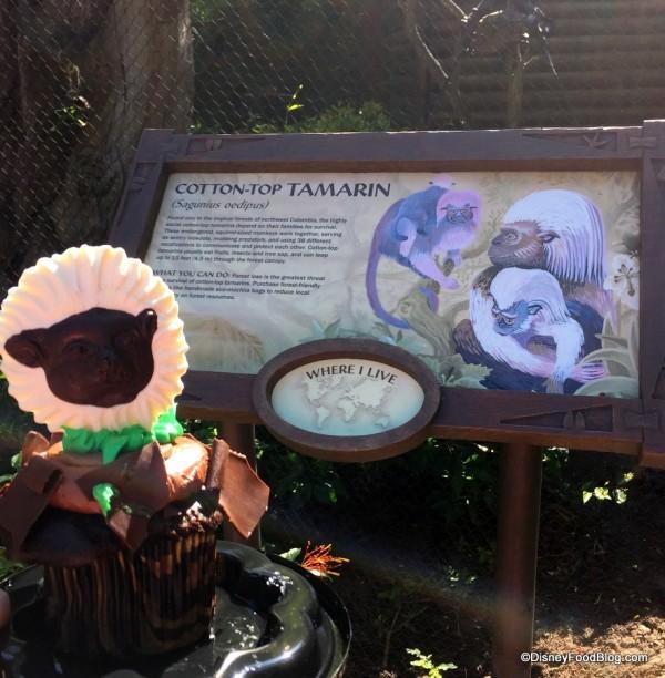Cotton Top Tamarin Exhibit