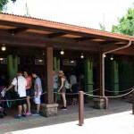 Updated Animal Kingdom Counter Service Options — Including the Reopened Flame Tree Barbecue!