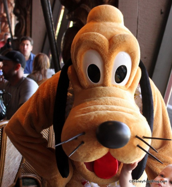 Pluto (at 'Ohana) is always up for a fun chat!