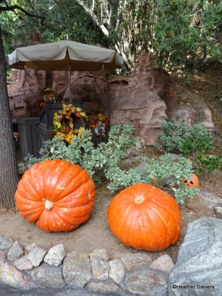 Giant Pumpkins! They're REAL!