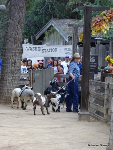 Ranch Residents Lining Up to Head to the Stables