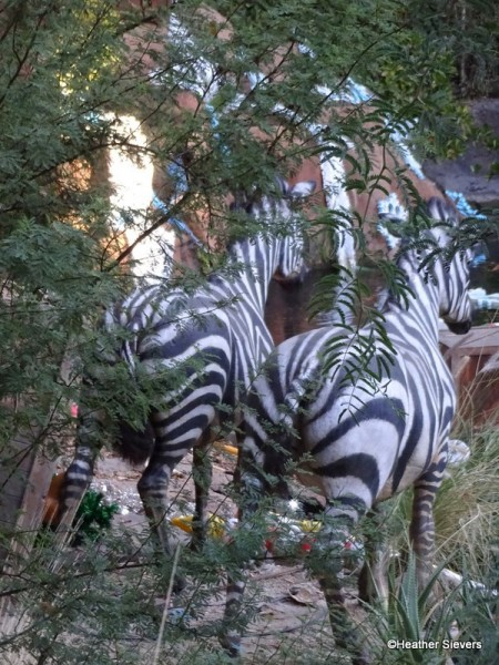The Backside of Zebras