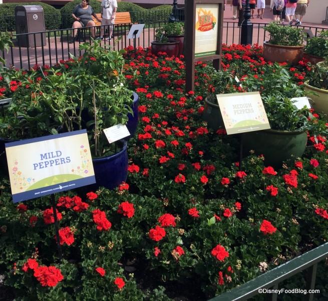 Fire Garden -- Peppers