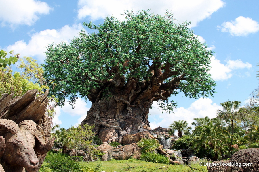 Photo Tour and Review: Sights — and Snacks — in Animal Kingdom AT NIGHT! | the disney food blog
