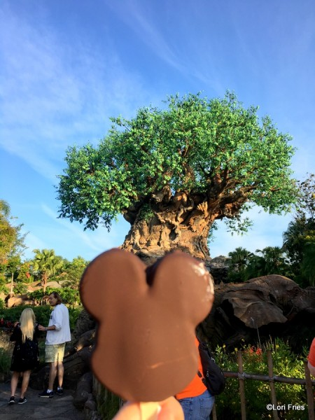 First treat in Animal Kingdom