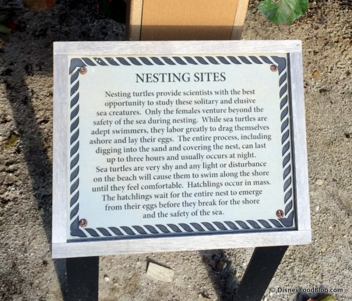 Sea Turtle Nesting Information