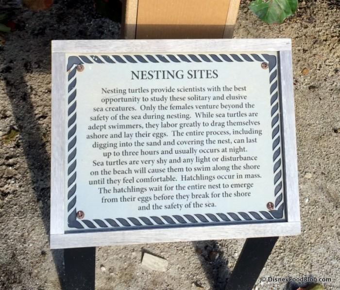 Sea Turtle Nesting Information
