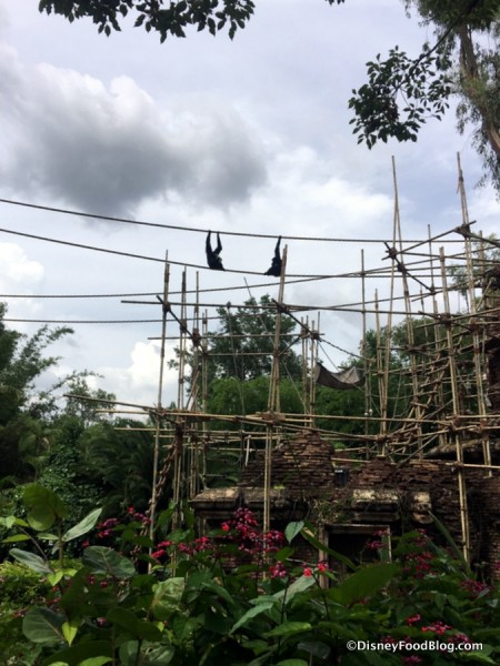 Monkeys in Animal Kingdom