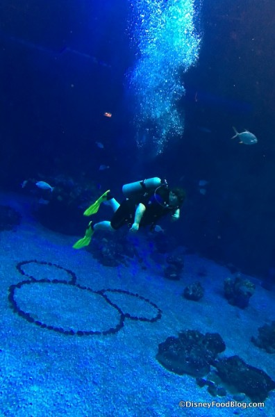 Ten 😄Bizarre😄 Things You Never Knew You Could Do at Disney World