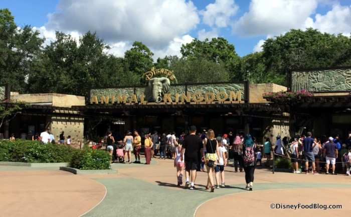 Welcome to Animal Kingdom!