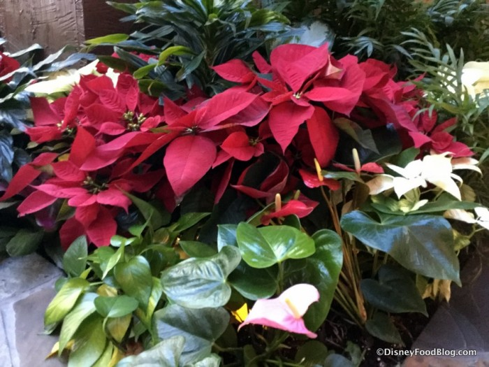 Poinsettias at the Polynesian