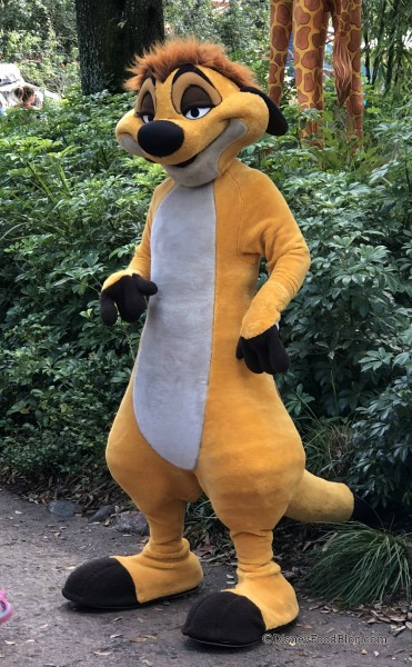 Meet Timon at Animal Kingdom