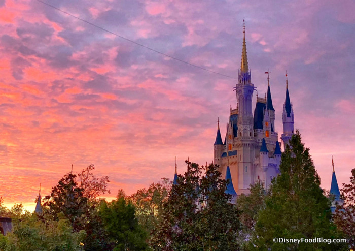 Ready to Head to Disney World?