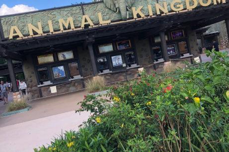 What's New in Disney World's Animal Kingdom: 10-20-18