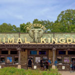 What's New in Disney's Animal Kingdom: Menu and Merchandise Updates, PLUS DuckTales!