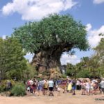 What's New in Disney's Animal Kingdom: Merchandise, Cupcakes, and Otters!