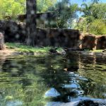 See the Newly Reopened Otter Grotto At Disney's Animal Kingdom