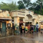 News! Circle of Flavors: Harambe at Night Special Event will Return to Disney's Animal Kingdom this Winter