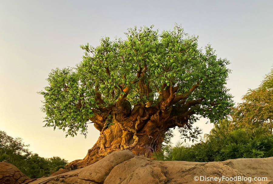 Walt Disney World presenting plans for reopening parks