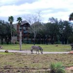 What's New at Disney's Animal Kingdom Lodge and Fort Wilderness — Matching T-Shirts, Star Wars Merch, and MORE!
