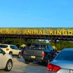 We're LIVE from the Grand Reopening of Disney's Animal Kingdom!