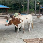 Disney World's Petting Zoo May Welcome in Guests This Weekend!