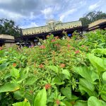 What's New at Animal Kingdom: DinoLand Fun, the Return of In-Demand Minnie Ears, and More!