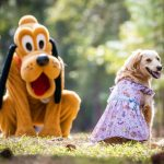 🐱 A HUGE New Disney Collection Will Let Us MATCH With Our Pets Soon! 🐶