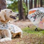 Match With Your Fur-Ever Friends With Disney's New Raincoat!