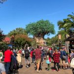 What's New at Disney's Animal Kingdom and Coronado Springs Resort: High Crowd Levels and Holiday Cupcakes!